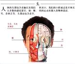 全套人体解剖图