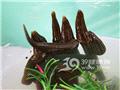人工养殖活水蛭
