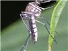 蚊子会传播乙肝?错!