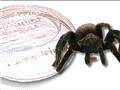 2、烘焙毒蜘蛛