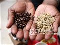 非洲朋友教你自制咖啡3