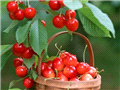 8、樱桃:预防关节炎