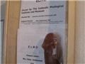 探秘冰岛生殖器博物馆