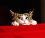 英国女子不惜重金养40只猫导致离婚
