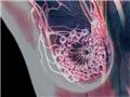 奇幻!医学3D透视下的人体奇观(来源:新华网)