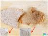 未加工的、煮熟后的猪肉与加入牛肉精膏腌制过的、煮熟后猪肉