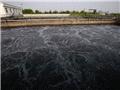 全球服装品牌的中国水污染调查