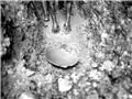 哥伦比亚淘金者的生存实录