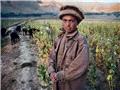 震撼记录阿富汗的苦难童工