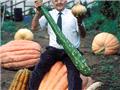 超乎寻常的巨型蔬菜