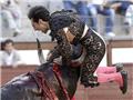 西班牙暴怒公牛顶穿斗牛士肚皮