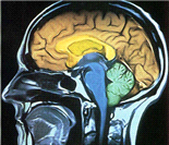 医学探索:人体的九个缺陷