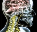 神奇的医学3D人体美图