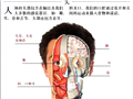 全套人体解剖图 彻底了解自己
