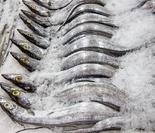 古代疼痛的膀胱结石手术