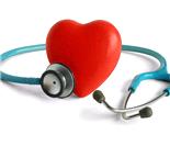 心血管系统解剖图