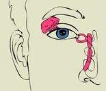 心脏活动时所发生的电力线向身体各部的扩布