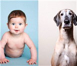 当小宝宝遭遇大丹狗―Maggie和狗姐姐Gracie的故事