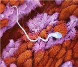 精子发育成胎儿过程超清晰照片