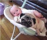 萌!当宝宝遇到狗狗
