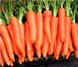 其实都是常见的!排毒功能最强的19种食物
