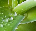 芒种养生:6种防暑降温的宝贝食物