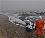 绿色和平组织调查临江水污染