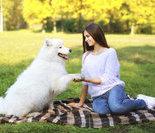 宠物教你做瑜伽4