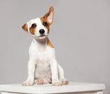 宠物教你做瑜伽7