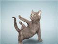 萌宠动物教你做瑜伽