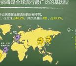 1型丙型肝炎病毒是全球流行最广泛的基因型